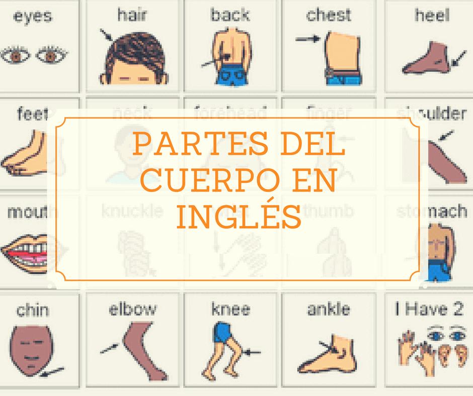 Aprender las partes del cuerpo en inglés y español